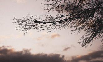 Conversaciones terapéuticas en la naturaleza